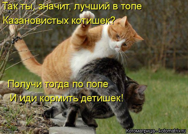 Котоматрица: Так ты, значит, лучший в топе Казановистых котишек? Получи тогда по попе И иди кормить детишек!