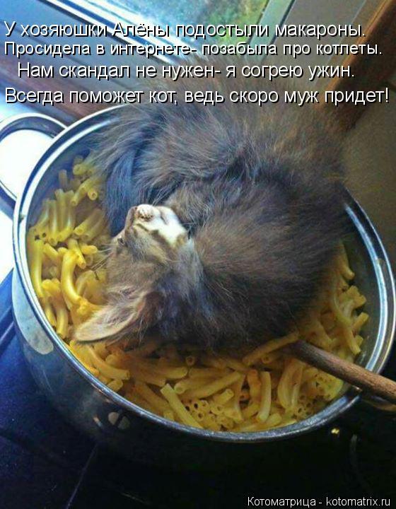 Котоматрица: Просидела в интернете- позабыла про котлеты. У хозяюшки Алёны подостыли макароны. Нам скандал не нужен- я согрею ужин. Всегда поможет кот, ве