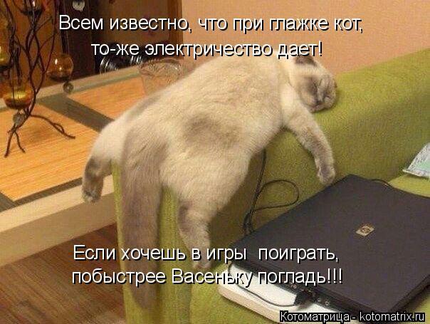 Котоматрица: побыстрее Васеньку погладь!!! Если хочешь в игры  поиграть, Всем известно, что при глажке кот, то-же электричество дает!