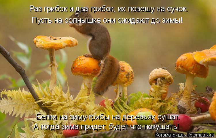Котоматрица: Белки на зиму грибы на деревьях сушат. А когда зима придет, будет что покушать! Раз грибок и два грибок, их повешу на сучок. Пусть на солнышке