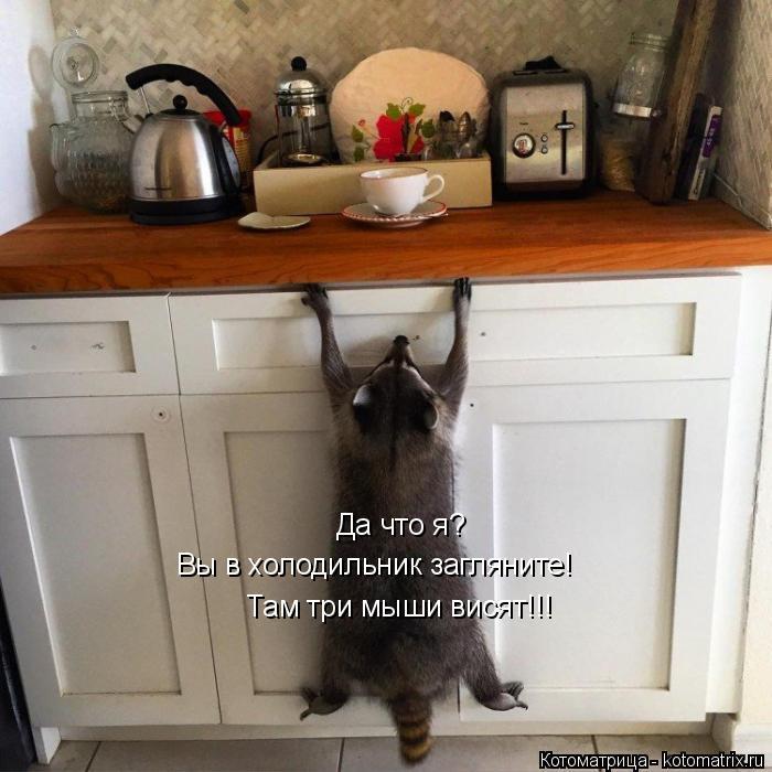 Котоматрица: Да что я? Вы в холодильник загляните! Там три мыши висят!!!