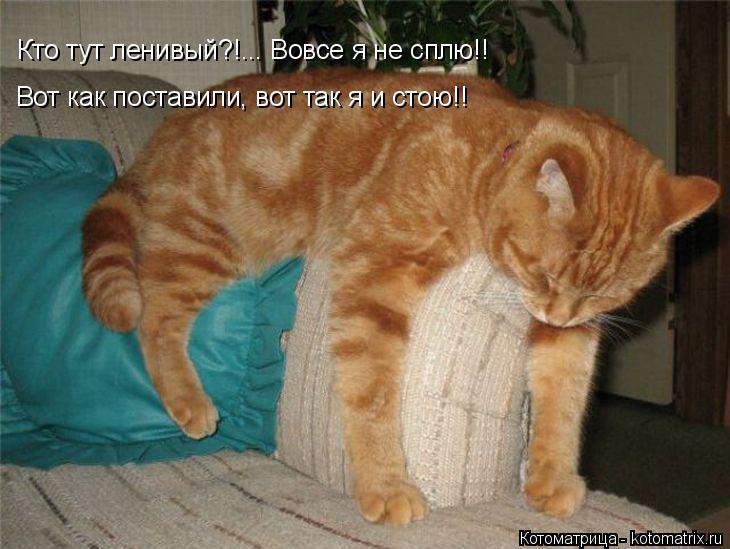 Котоматрица: Кто тут ленивый?!... Вовсе я не сплю!! Вот как поставили, вот так я и стою!!