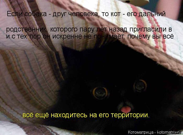 Котоматрица: родственник, которого пару лет назад пригласили в  и с тех пор он искренне не понимает, почему вы всё  Если собака - друг человека, то кот - его
