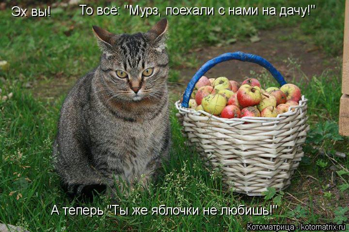 """Котоматрица: Эх вы!  То всё: """"Мурз, поехали с нами на дачу!"""" А теперь """"Ты же яблочки не любишь!"""""""