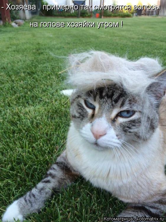 Котоматрица: - Хозяева , примерно так смотрятся волосы на голове хозяйки утром !