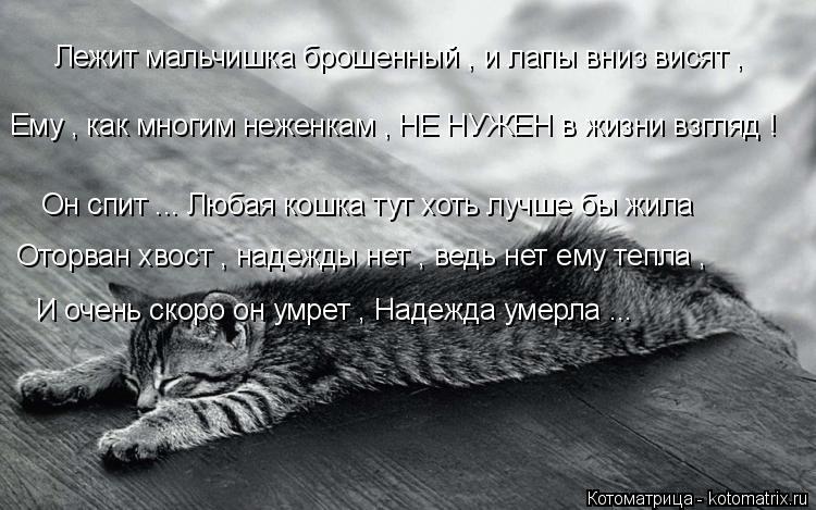 Котоматрица: Он спит ... Любая кошка тут хоть лучше бы жила Лежит мальчишка брошенный , и лапы вниз висят , Оторван хвост , надежды нет , ведь нет ему тепла ,