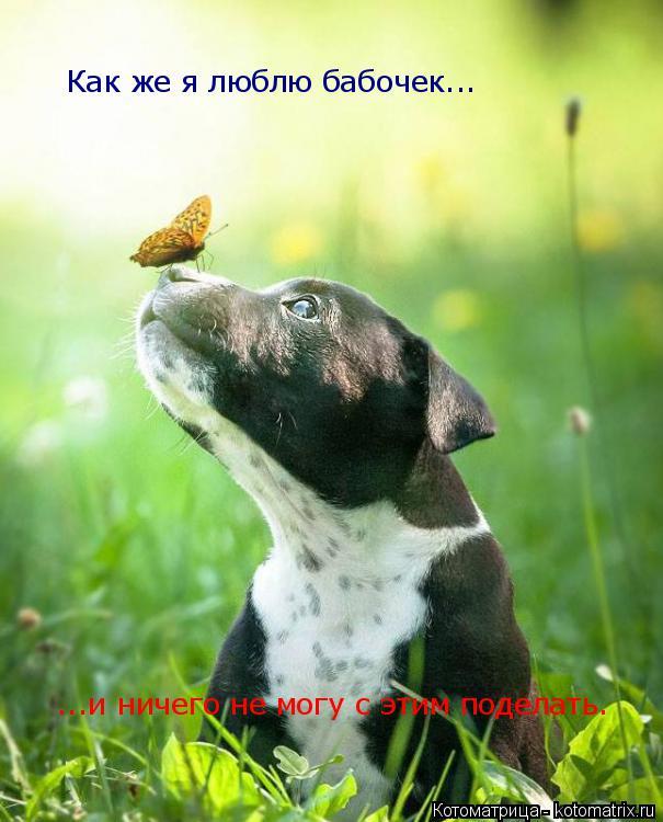 Котоматрица: Как же я люблю бабочек... ...и ничего не могу с этим поделать.