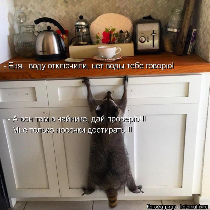 Котоматрица: - Еня,  воду отключили, нет воды тебе говорю! - А вон там в чайнике, дай проверю!!! Мне только носочки достирать!!!
