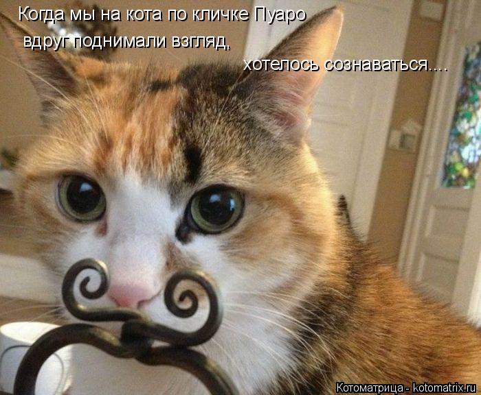 Котоматрица: Когда мы на кота по кличке Пуаро вдруг поднимали взгляд,  хотелось сознаваться....