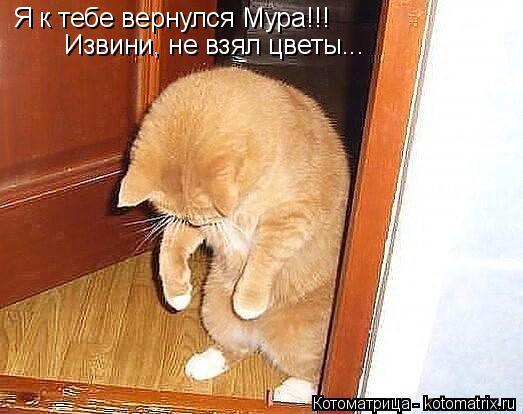 Котоматрица: Я к тебе вернулся Мура!!! Извини, не взял цветы...