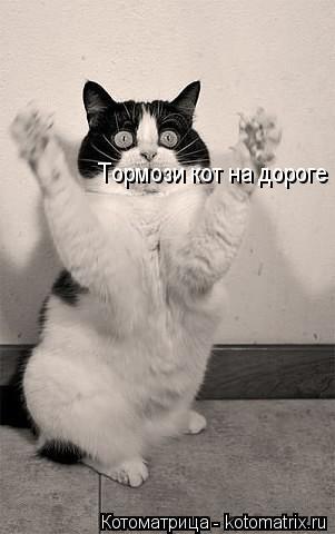 Котоматрица: Тормози кот на дороге