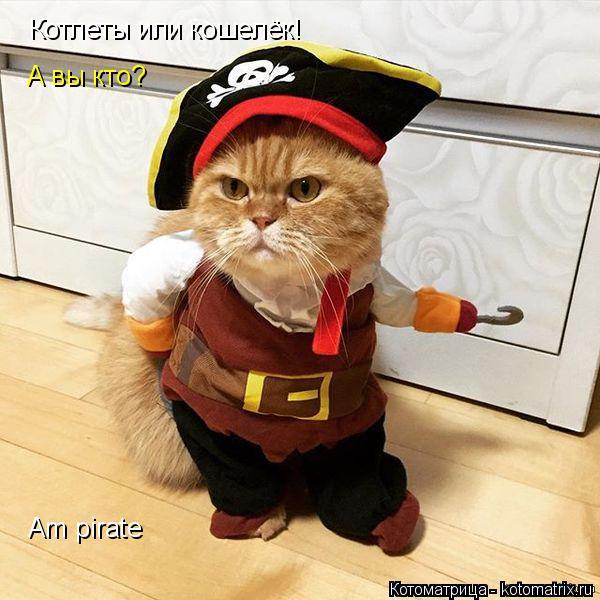 Котоматрица: Котлеты или кошелёк! А вы кто? Am pirate