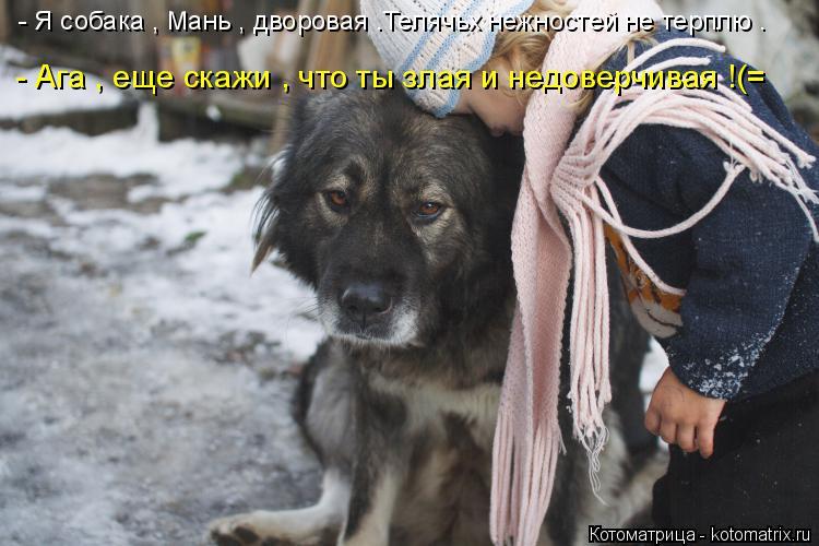 Котоматрица: - Я собака , Мань , дворовая .Телячьх нежностей не терплю . - Ага , еще скажи , что ты злая и недоверчивая !(=
