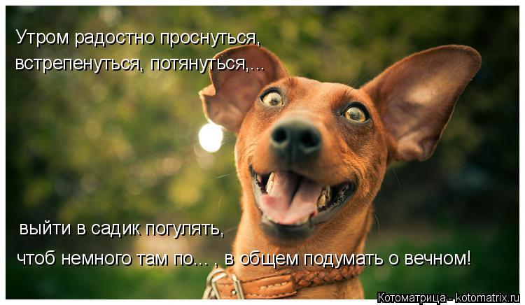 Котоматрица: Утром радостно проснуться, встрепенуться, потянуться,... выйти в садик погулять, чтоб немного там по... , в общем подумать о вечном!