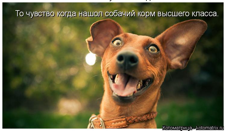 Котоматрица: То чувство когда  То чувство когда нашол собачий корм высшего класса.