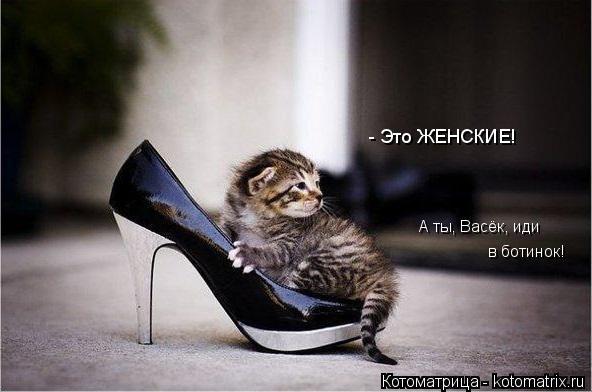 Котоматрица: в ботинок! А ты, Васёк, иди - Это ЖЕНСКИЕ!