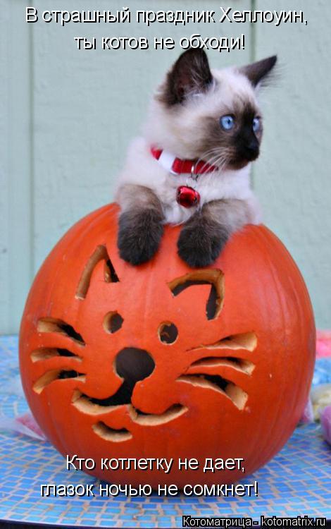 Котоматрица: Кто котлетку не дает, глазок ночью не сомкнет! В страшный праздник Хеллоуин, ты котов не обходи!