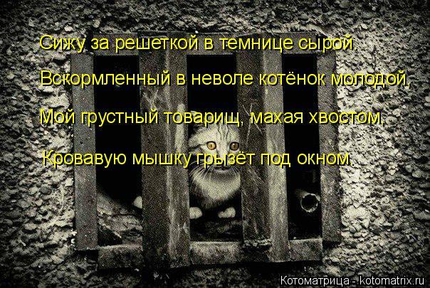 Котоматрица: Сижу за решеткой в темнице сырой. Вскормленный в неволе котёнок молодой, Мой грустный товарищ, махая хвостом, Кровавую мышку грызёт под окн