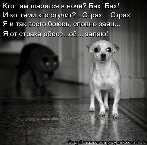 Котоматрица: Кто там шарится в ночи? Бах! Бах! И когтями кто стучит?...Страх... Страх.. Я и так всего боюсь, словно заяц... Я от страха обосс...ой... залаю!