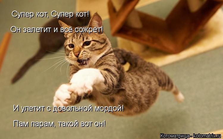 Котоматрица: Супер кот, Супер кот! Он залетит и всё сожрёт! И улетит с довольной мордой! Пам парам, такой вот он! Пам парам, такой вот он!
