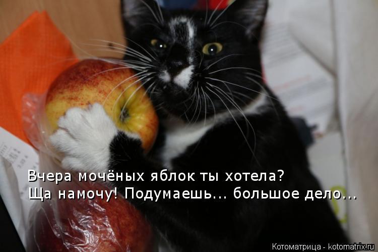 Котоматрица: Вчера мочёных яблок ты хотела? Ща намочу! Подумаешь... большое дело...