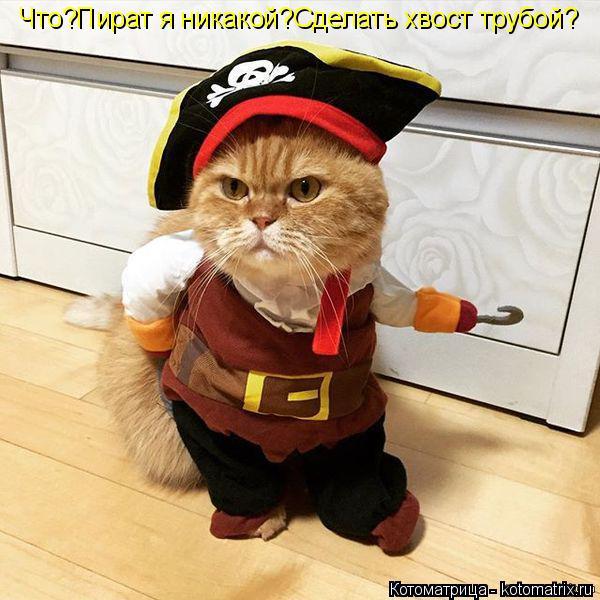Котоматрица: Что?Пират я никакой?Сделать хвост трубой?