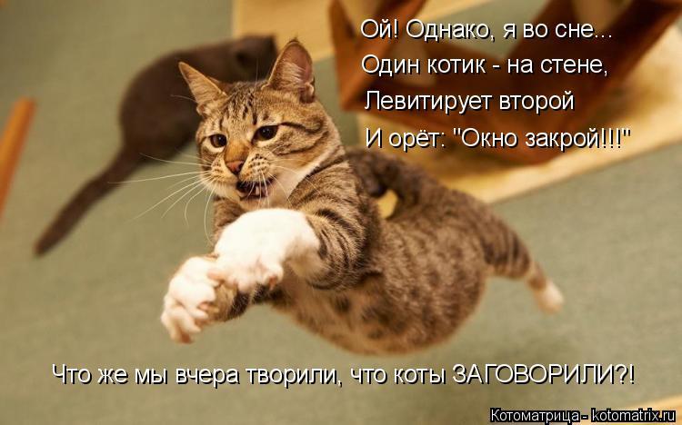 """Котоматрица: Ой! Однако, я во сне... Один котик - на стене, Левитирует второй И орёт: """"Окно закрой!!!"""" Что же мы вчера творили, что коты ЗАГОВОРИЛИ?!"""