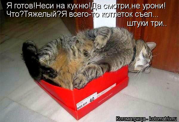 Котоматрица: Я готов!Неси на кухню!Да смотри,не урони! Что?Тяжелый?Я всего-то котлеток съел... штуки три..
