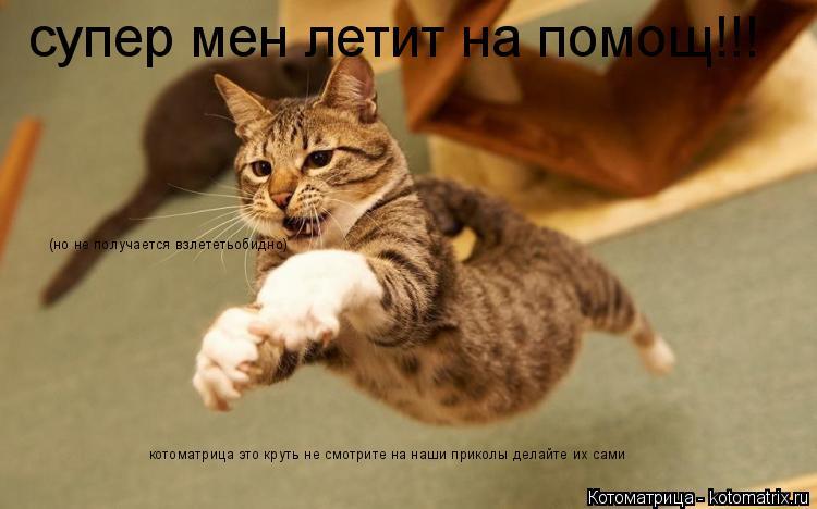 Котоматрица: супер мен летит на помощ!!! (но не получается взлететьобидно) котоматрица это круть не смотрите на наши приколы делайте их сами