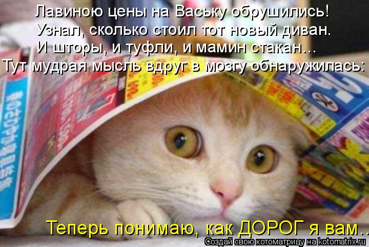 Котоматрица: Лавиною цены на Ваську обрушились! Узнал, сколько стоил тот новый диван. Теперь понимаю, как ДОРОГ я вам… И шторы, и туфли, и мамин стакан…  Т