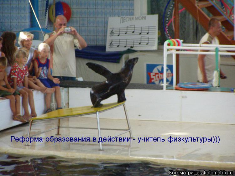 Котоматрица: Реформа образования в действии - учитель физкультуры)))