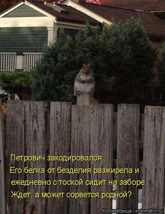 Котоматрица: Ждет: а может сорвется родной? ежедневно с тоской сидит на заборе. Его белка от безделия разжирела и Петрович закодировался...