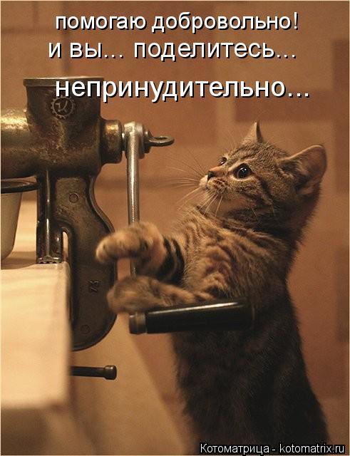 Котоматрица: помогаю добровольно! и вы... поделитесь... непринудительно...