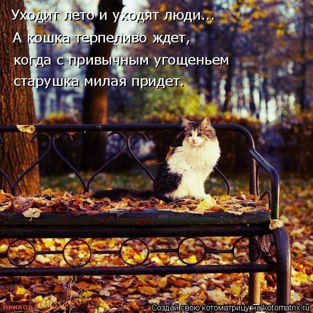 Котоматрица: Уходит лето и уходят люди... А кошка терпеливо ждет, когда с привычным угощеньем старушка милая придет.