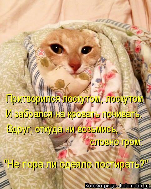 """Котоматрица: Притворился лоскутом, лоскутом И забрался на кровать почивать. Вдруг, откуда ни возьмись, словно гром: """"Не пора ли одеяло постирать?"""""""