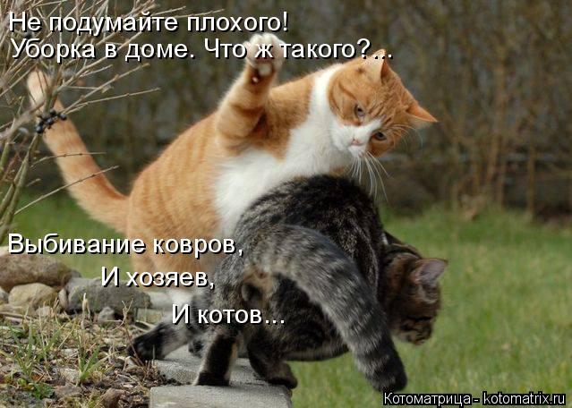 Котоматрица: Не подумайте плохого! Уборка в доме. Что ж такого?... Выбивание ковров, И хозяев, И котов...
