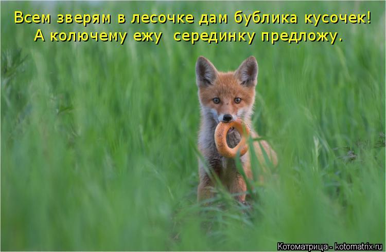 Котоматрица: Всем зверям в лесочке дам бублика кусочек! А колючему ежу  серединку предложу.