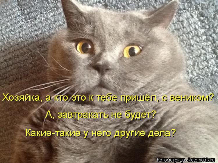 Котоматрица: Хозяйка, а кто это к тебе пришёл, с веником? А, завтракать не будет? Какие-такие у него другие дела?