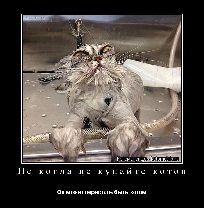 Котоматрица: Не когда не купайте котов Он может перестать быть котом