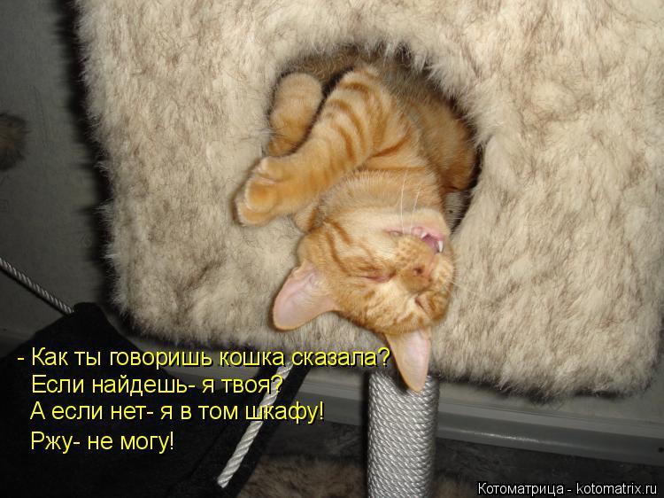 Котоматрица: - Как ты говоришь кошка сказала?  Если найдешь- я твоя?  А если нет- я в том шкафу! Ржу- не могу!
