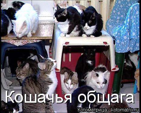 Котоматрица: Кошачья общага