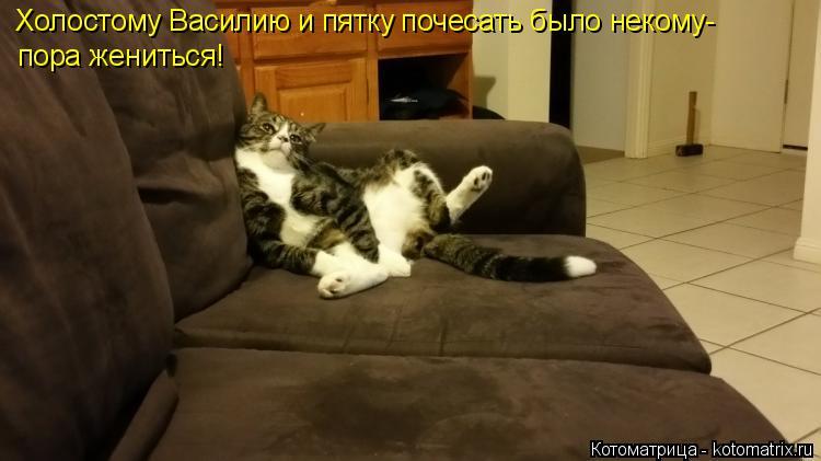 Котоматрица: Холостому Василию и пятку почесать было некому- пора жениться!