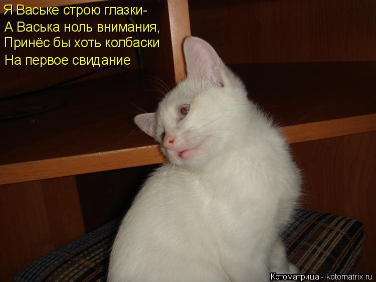 Котоматрица: Я Ваське строю глазки-  А Васька ноль внимания, Принёс бы хоть колбаски На первое свидание
