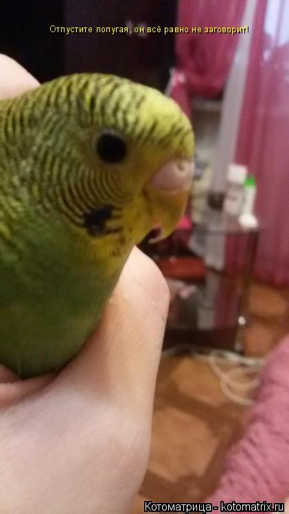 Котоматрица: Отпустите попугая, он всё равно не заговорит!