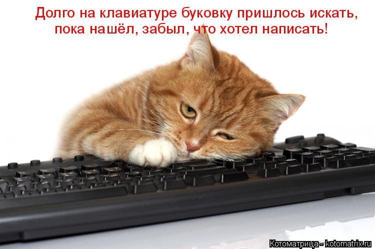 Котоматрица: Долго на клавиатуре буковку пришлось искать,   пока нашёл, забыл, что хотел написать!