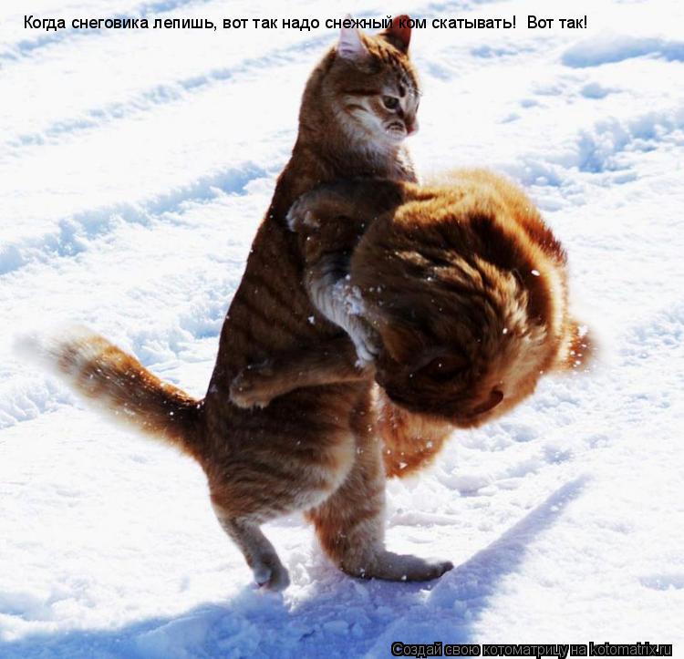 Котоматрица: Когда снеговика лепишь, вот так надо снежный ком скатывать! Вот так!