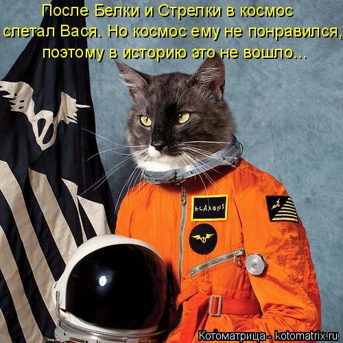 Котоматрица: После Белки и Стрелки в космос слетал Вася. Но космос ему не понравился, поэтому в историю это не вошло...