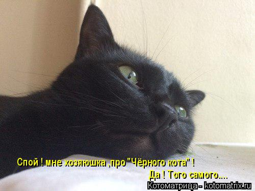 "Котоматрица: Спой ! мне хозяюшка ,про ""Чёрного кота"" !  Да ! Того самого...."