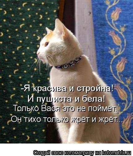 Котоматрица: -Я красива и стройна! И пушиста и бела! Только Вася это не поймёт. Он тихо только жрёт и жрёт...