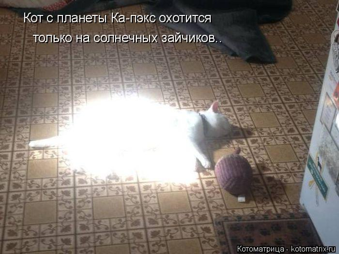 Котоматрица: Кот с планеты Ка-пэкс охотится  только на солнечных зайчиков..